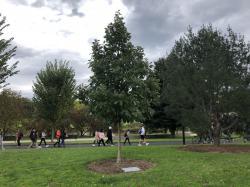 Suzanne Ruth Dirr Tribute Tree