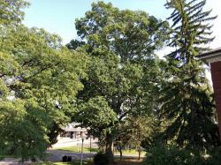 1903 MAC Class Tree