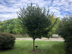 CMASS Tribute Tree