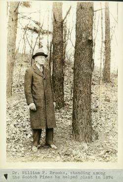 William P. Brooks standing among pines, 1934
