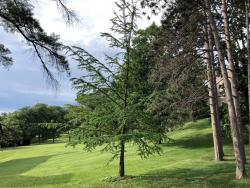 Todd R. Hill Tribute Tree