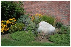 William A. Rosenau Garden