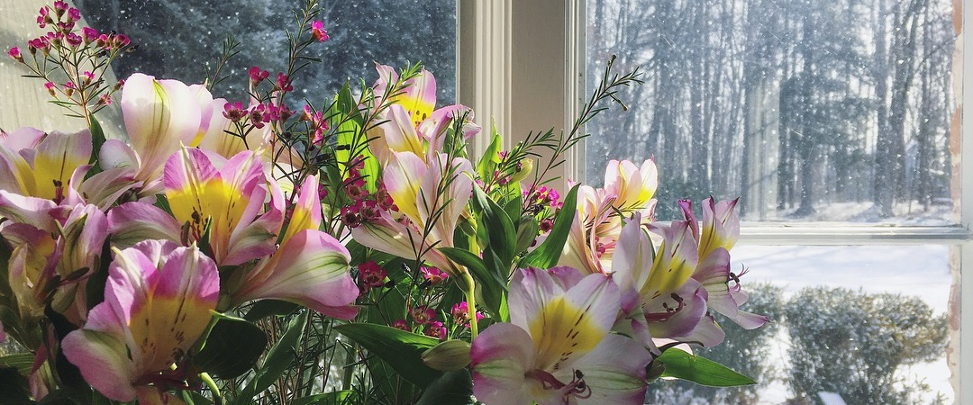 Flowers in the window of the directors office at the center, snow outside.