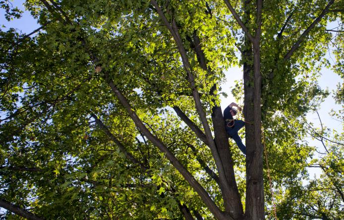UMass School of Earth and Sustainability Arboriculture undergraduate major science outdoors