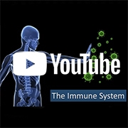 Nutrition immune system graphic
