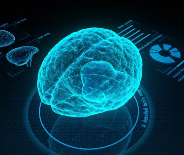 Social, Cognitive and Affective Neuroscience at UMass, Amherst