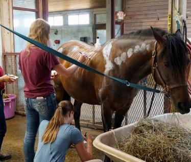 UMass Amherst, Equine Science