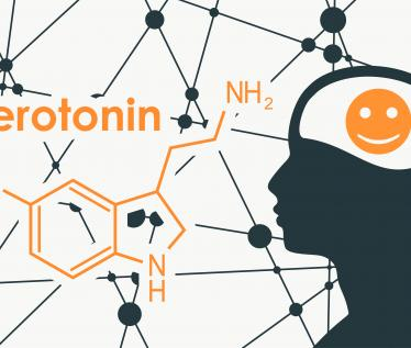 Serotonin with brain