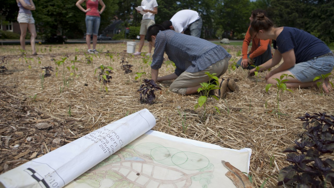 Permaculture at the University of Massachusetts Amherst
