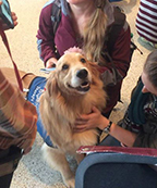 Photo of therapy dog with students